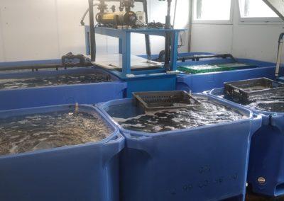 viviers de stockage - Nos produits