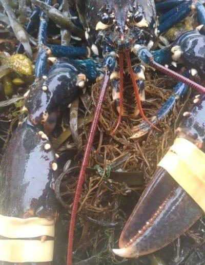 homard - Nos produits